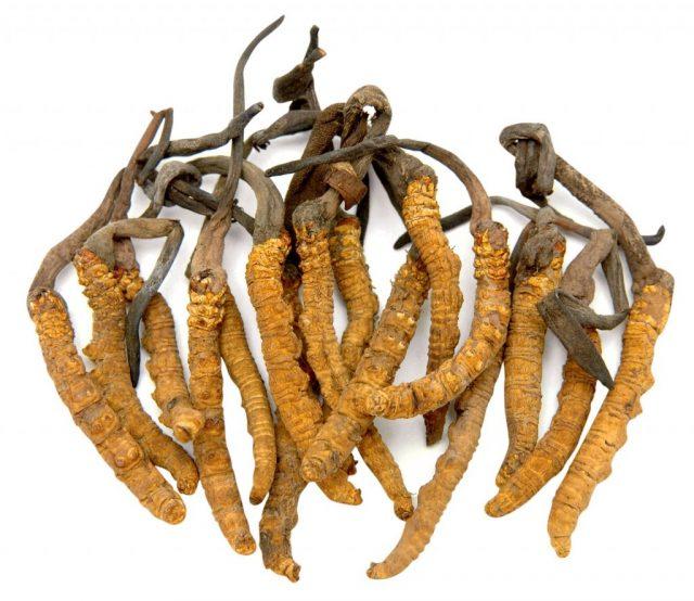 Đông trùng hạ thảo – BS Nguyễn Đức Kiệt