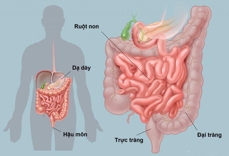 Chữa viêm nhiễm cấp đường tiêu hóa – BS Nguyễn Đức Kiệt